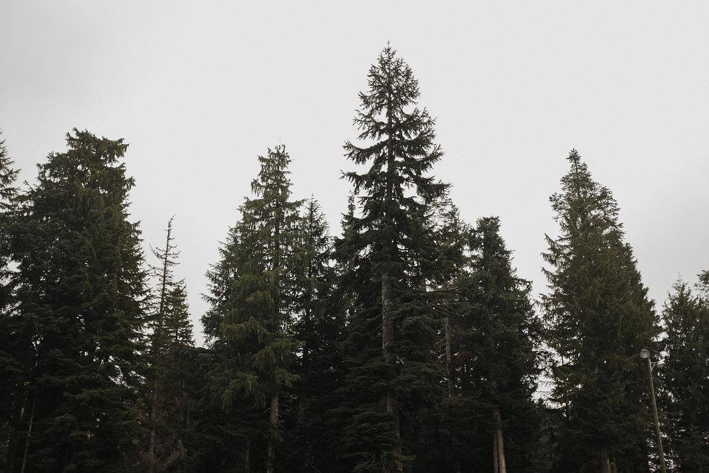 UpKnorth-Cypress-1